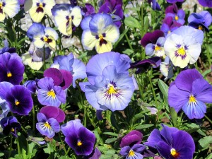 We grow our bedding plants right here on the farm for your container or garden.